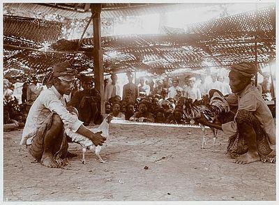 Sepenggal Sejarah Sabung Ayam Di Indonesia
